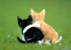 0.baby_animals_003[1].jpg